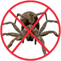 Les  araignees